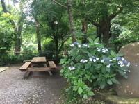 終わりゆく紫陽花を楽しむ~浄智寺 - カマクラ ときどき イタリア