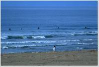 早朝サーファー - ハチミツの海を渡る風の音