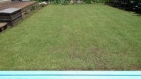 クラピア刈り - うちの庭の備忘録 green's garden