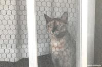 網戸の季節(脱走防止柵) - 賃貸ネコ暮らし|賃貸住宅でネコを室内飼いする工夫