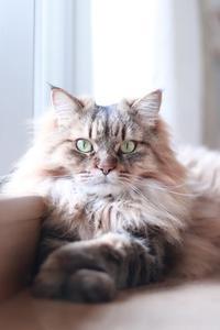 掃除機ブラシも好きな猫 - きょうだい猫と仲良し暮らし
