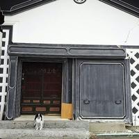 蔵町散歩☆人参 - 狆の茶々丸