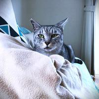 お昼寝毛布となっちゃん - にゃんず日記