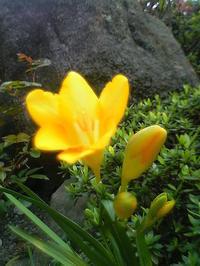 近所の公園の脇に咲いてる花 - 信仙のブログ