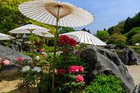 浄土庭園の春(當麻寺奥院) - 花景色-K.W.C. PhotoBlog