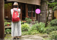自由が丘の初心者フォトレッスンコース『カメラに恋するフォトレッスン』略して恋フォトの第一回お日にち決定しました - 東京女子フォトレッスンサロン『ラ・フォト自由が丘』-写真とフォントとデザインと現像と-
