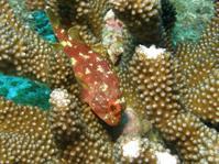 2012.07 奄美 The 3nd day The 2nd Dive - ランゲルハンス島の海
