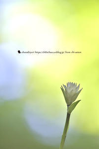 ともしび - お花びより