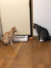 そして松本城へ - 愛犬家の猫日記
