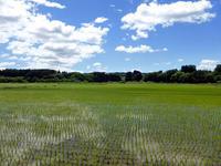 緑と山と田園と - 田舎と孤独と私