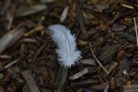 白い羽を見つけた ~今週のウトナイ湖 - やぁやぁ。