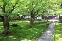 癒しの苔色 - CHIROのお庭しごと