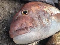 最近の釣果は… - 【たまりん】 の マリーナ奮闘記