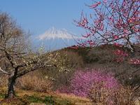 春の西富士めぐり - 徒然彩時記