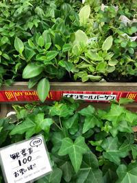 バーゲンの事を忘れてしまってた(^^;; - ブレスガーデン Breath Garden 大阪・泉南のお花屋さんです。バルーンもはじめました。