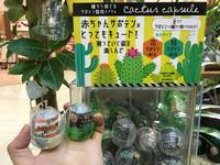 みんな大好きガチャ♪♪ - ブレスガーデン Breath Garden 大阪・泉南のお花屋さんです。バルーンもはじめました。