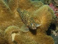 2012.07 奄美 The 3nd day The 3rd Dive - ランゲルハンス島の海