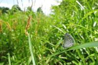 真夏日の散歩 - 蝶の縁