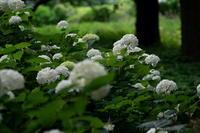 甘酸っぱい思い出ヤマモモ(山桃)他 - 身近な自然を撮る