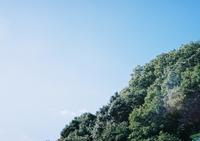 YASHICA ELECTRO 35 試写 - photoな日々