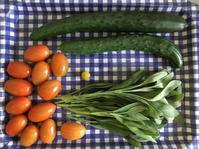 日に日に増えるプチトマトの収穫 - いととはり