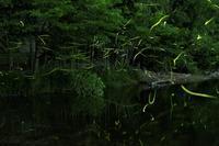ホタルの住む川 - katsuのヘタッピ風景