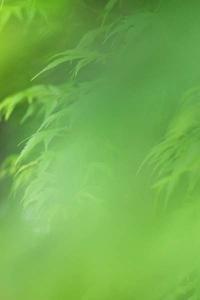 緑の向こう側 - ainosatoブログ02