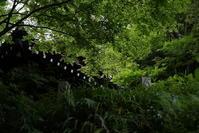 6.16 妙本寺 - 週末はソニーα6500でぶらり鎌倉・湘南散歩!