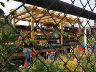 珍しい苗いっぱいバークレーの園芸店 - ちょっと田舎暮らしCalifornia