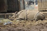 3月の多摩動物公園~眠りに誘われて - 続々・動物園ありマス。