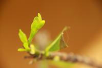 挿し木で成長 - Hair Produce TIARE