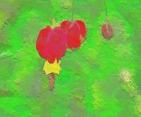 チロリアンランプ(ウキツリボク) 3 - 光 塗人 の デジタル フォト グラフィック アート (DIGITAL PHOTOGRAPHIC ARTWORKS)
