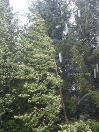 嵐と葉とベジBoxと雨水 - f's note ak