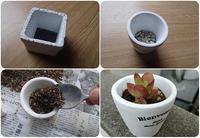 新しくミニ多肉植物の鉢を作っています - スポック艦長のPhoto Diary