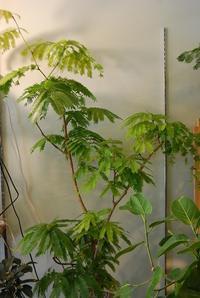 観葉植物を育てませんか? - 花と暮らす店 木花 Mocca