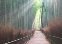 竹林の小径 2 - Patrappi annex