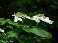 山の中は白い花がいっぱい - LLC徒然