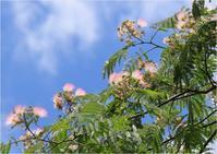 ☆散歩道のネムノキ・庭の花☆ - 気ままなフォトライフ