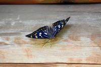 国蝶 - 季節の映ろひ