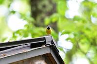 T森林植物園にて⑩ - 季節の映ろひ