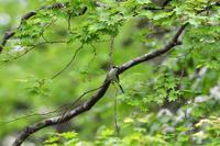 T森林植物園にて12 - 季節の映ろひ