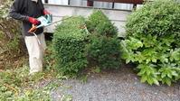 庭の低木を..... - 萩セミナーハウスBLOG
