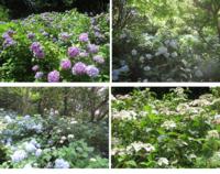 神戸市立森林植物園 - これから見る景色