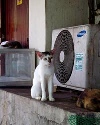 #1022 cats street - ちょた☆グラフ