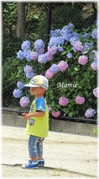 公園の紫陽花 - おだやかに たのしく Que Sera Sera