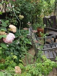スパイラル サポート ~ レオくんの暑い夏 - Gardener*s Diary
