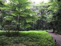 泉の森・植物(6月) - つれづれ日記