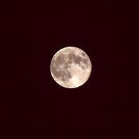 今夜はストロベリームーンがきれいに見えた!♪ - 『私のデジタル写真眼』