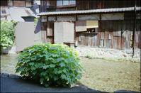 京都 白川 - のっとこ