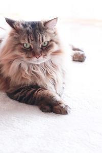 動物病院で皮下注射後に嘔吐 - きょうだい猫と仲良し暮らし